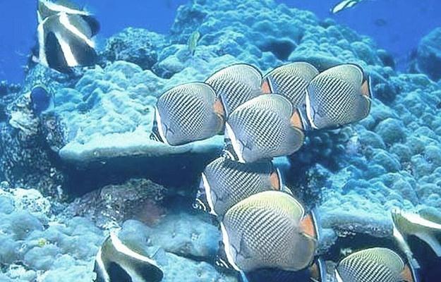 Дайвинг на Мальдивах - достопримечательности подводного мира