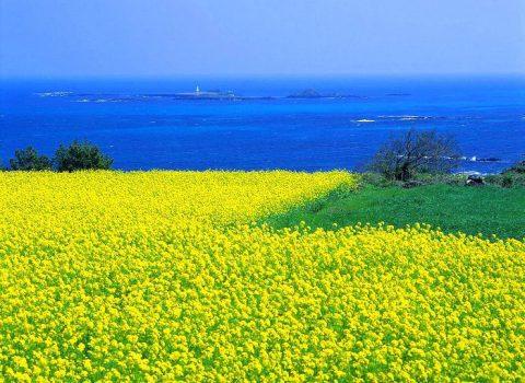 Остров Чеджу - чудо света с уникальной природой Южной Кореи