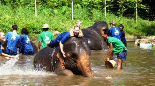 Поездки в Тайланде в мае на слона