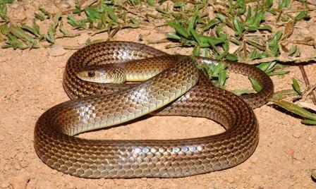 Как избежать укуса змеи в Тайланде