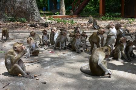 Что представляет из себя парк обезьян на Пхукете