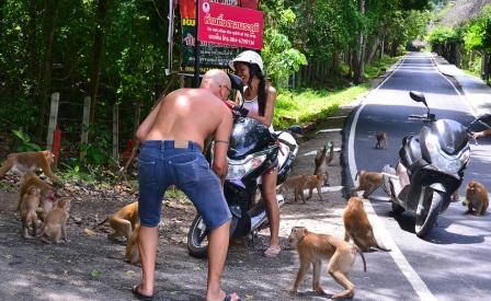 Как добраться до горы обезьян на Пхукете
