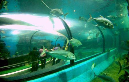 Океанариум на Пхукете (Phuket Aquarium)