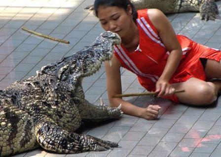 Шоу крокодилов на Пхукете