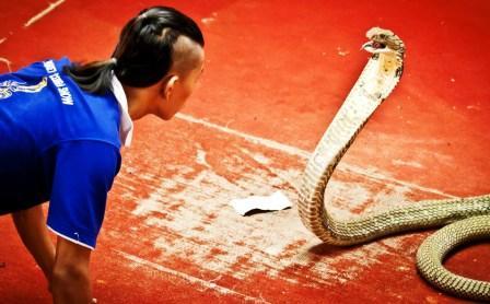 Змеиная ферма на Пхукете - Змеиное шоу