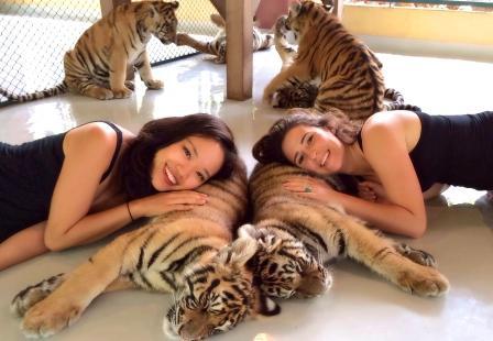 Королевство тигров Пхукет