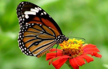 Бабочки Пхукета