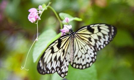 Долина бабочек на Пхукете