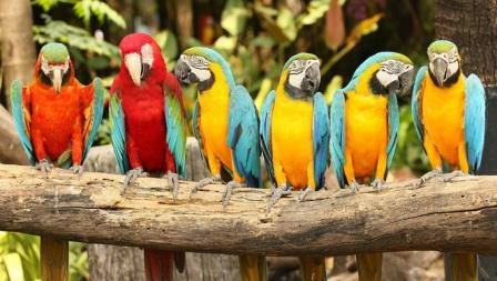 Парк птиц на Пхукете (Phuket Bird Park), как добраться, цены на билет