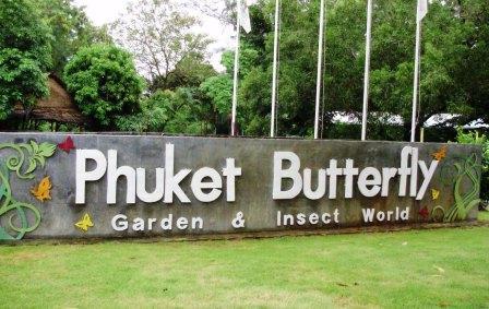 Сад бабочек на Пхукете, как добраться, цены на экскурсию
