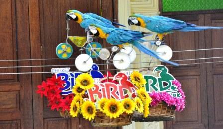 Шоу птиц на Пхукете
