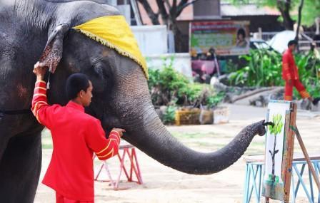 Шоу слонов на Пхукете - цены, режим работы