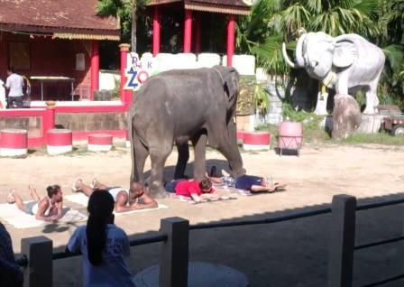 Слоны Пхукета - шоу в зоопарке Тайланда