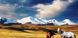 Нужна ли виза в Монголию для россиян и бывших стран СНГ